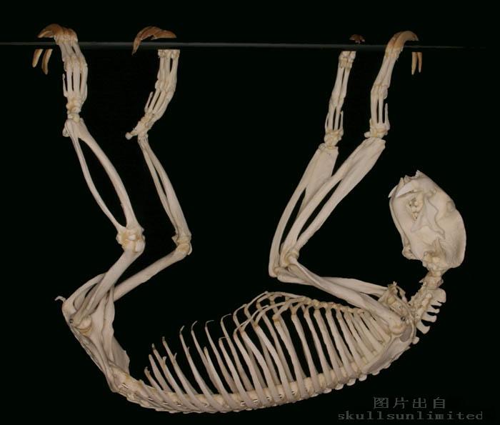 动物骨骼标本_动物图片库吧