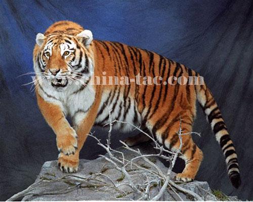 美国及加拿大野生动物标本展部分作品