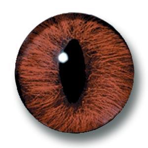 真实的反映了这种动物眼睛的